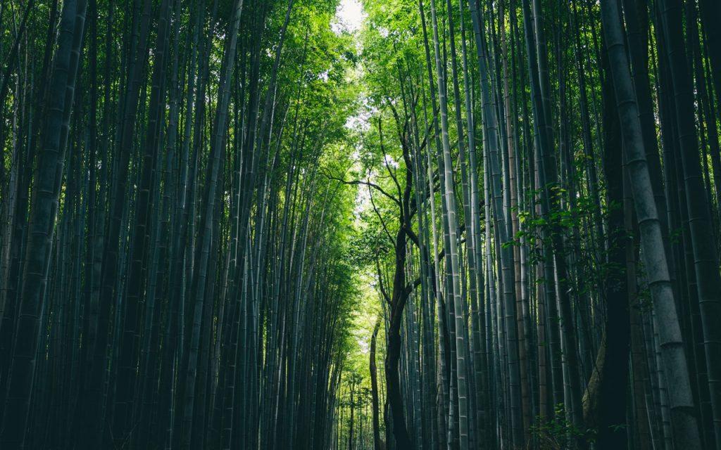 Las bellezas naturales de Japón te sorprenderán, como el bosque de bambú de Kioto.