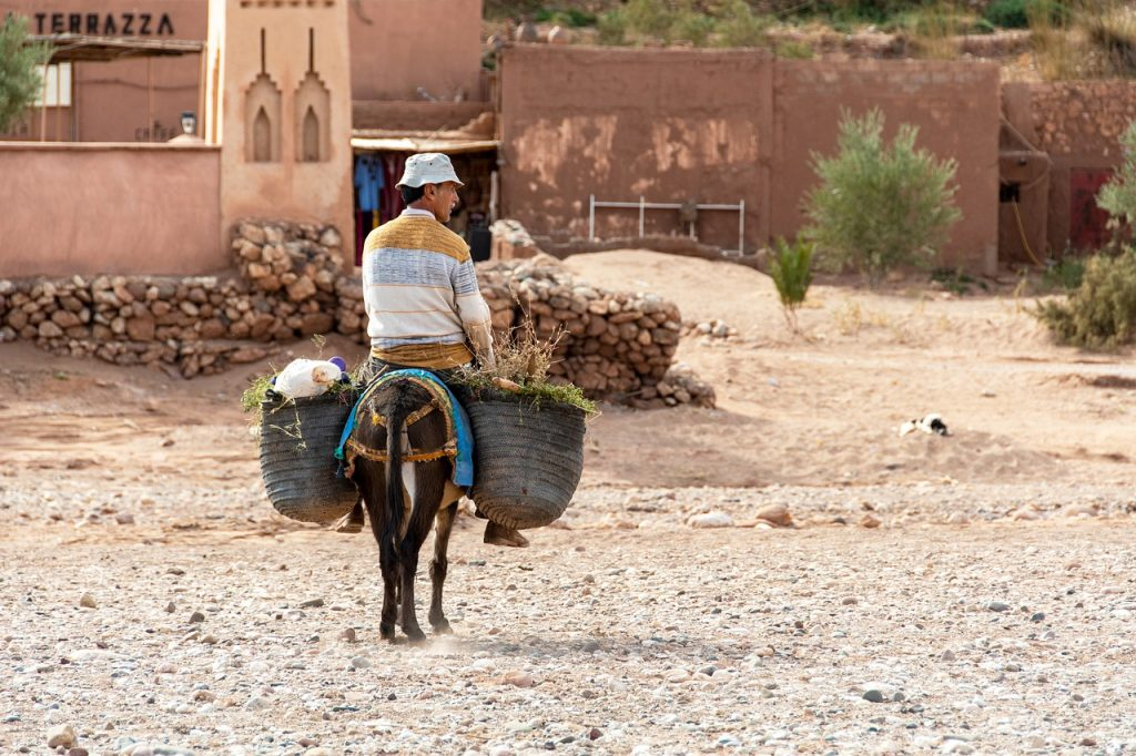 Los burros son muy habituales en Marruecos y te pueden dar algún susto en la carretera.